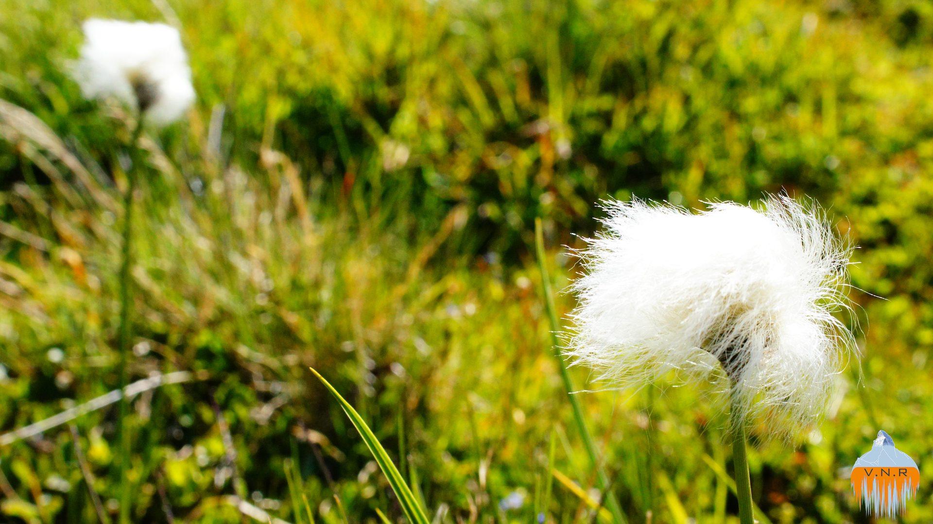Hairy Flower
