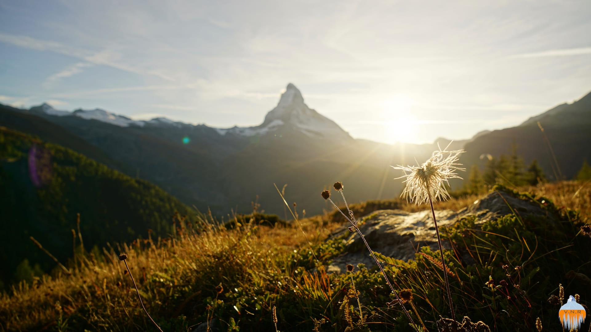 Matterhorn Flower